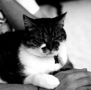 18th Aug 2011 - Cuddle