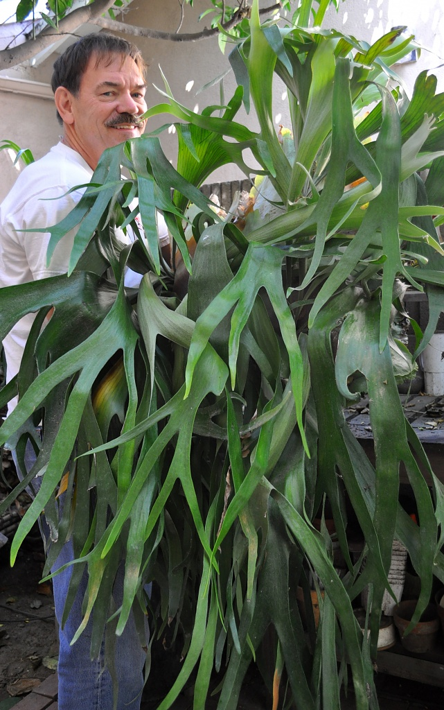 Staghorn Fern by Weezilou