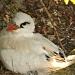 Nesting Silver Bosun Bird by lbmcshutter