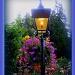Lamplight by vernabeth