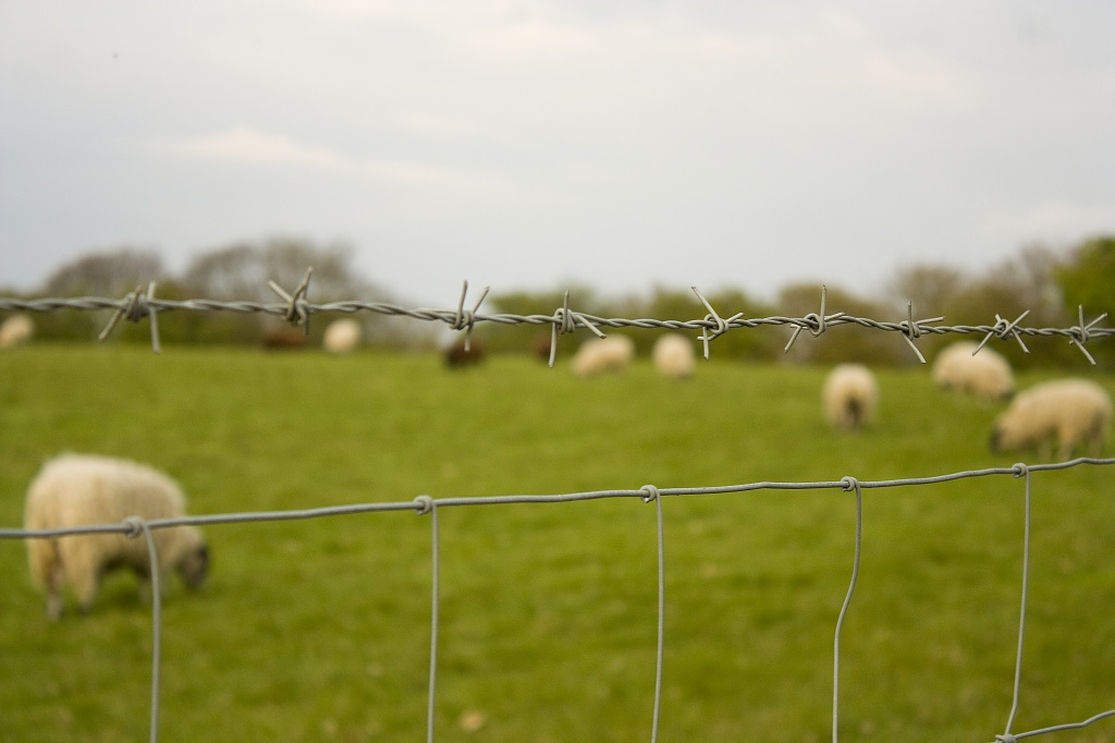 """""""Warning: Killer Sheep"""" sign just out of shot ... by edpartridge"""