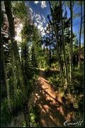 28th Aug 2011 - Take the Path