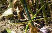 29th Aug 2011 - A Garden Buddy