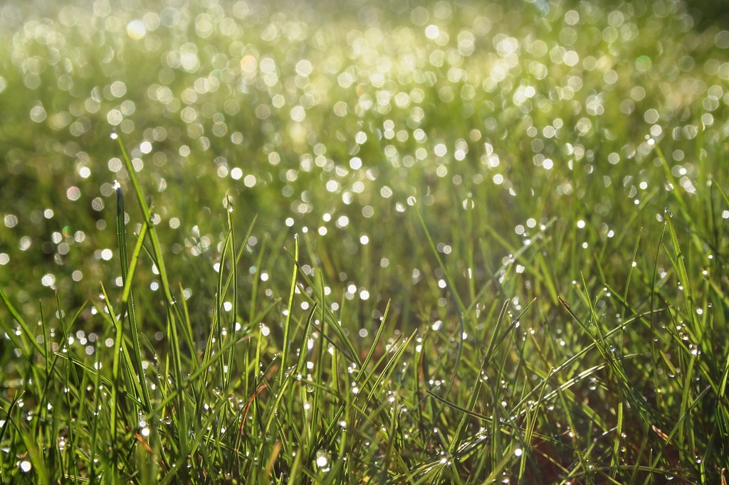 Morning Dew by lily
