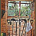 Tomatoes through the Potting Shed Window by judithdeacon