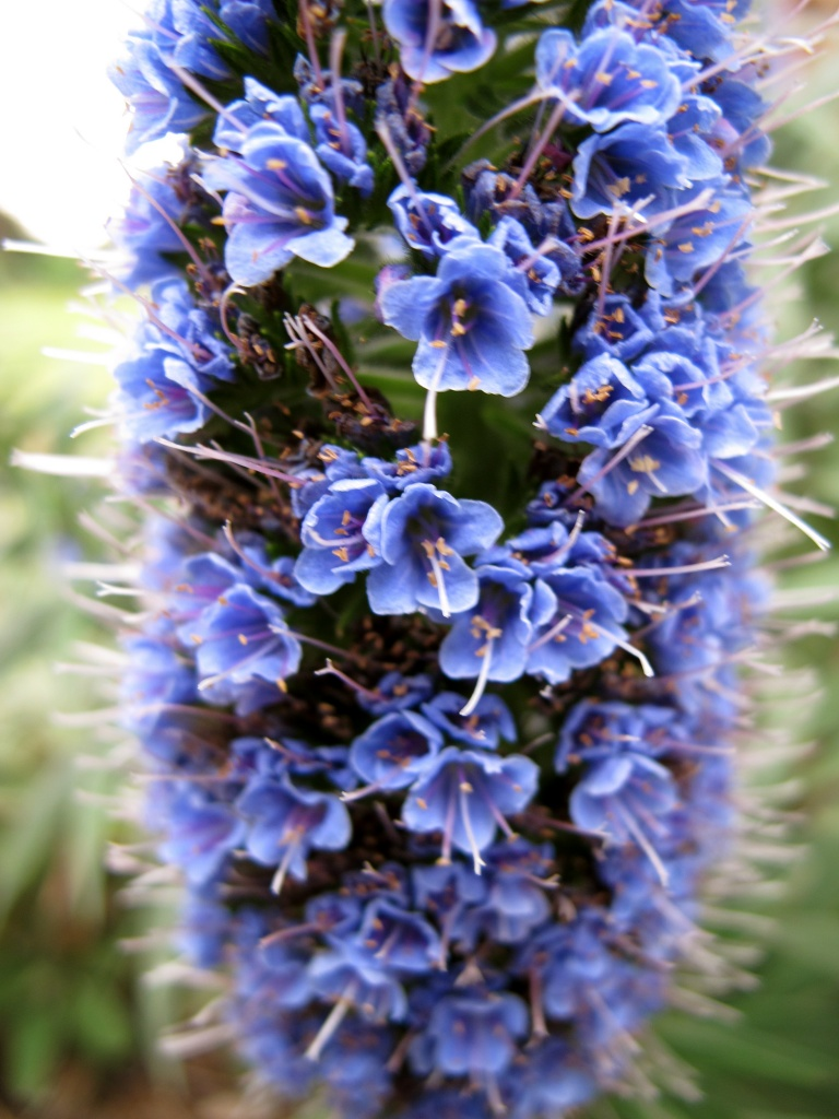 Blue by alia_801