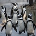 The penguins walked in three by three by eleanor