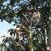Bernie Chops Down the Mango Tree by loey5150