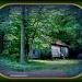 Deserted House  by vernabeth