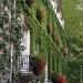Ivy & geranium by parisouailleurs