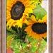 Birthday Bouquet by allie912