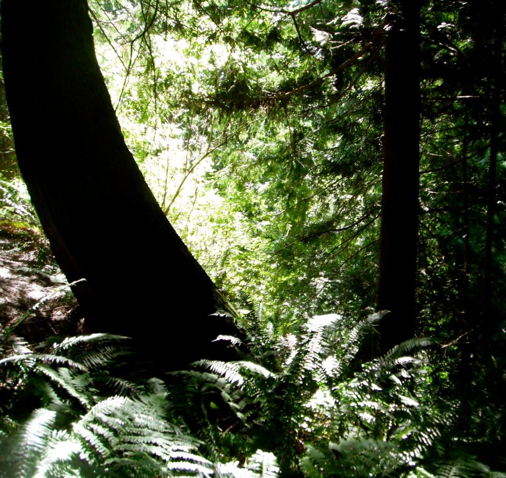 Woodland Ravine by pamelaf