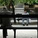 Men in the park by parisouailleurs
