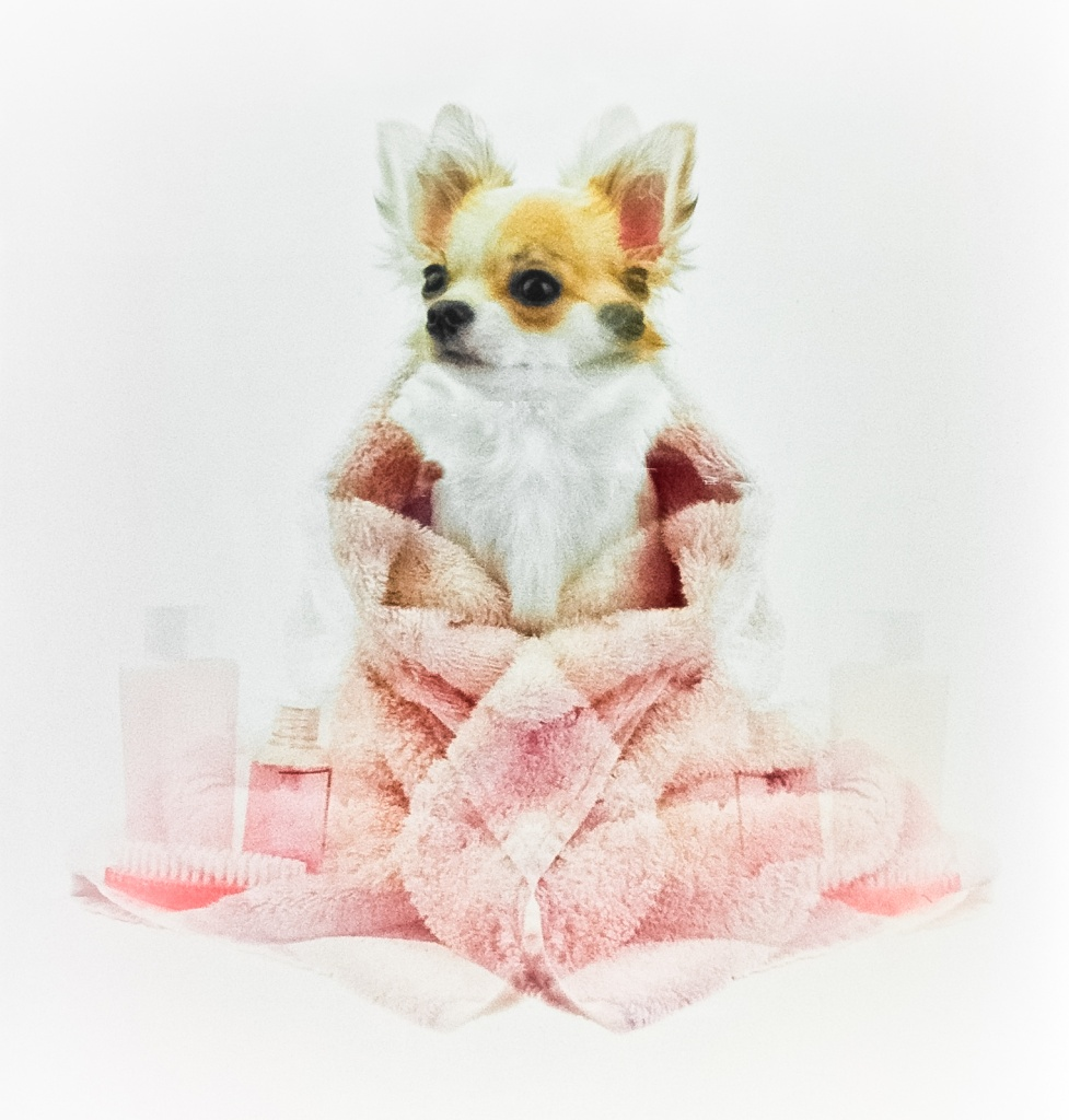 Mutant Pet Grooming Supplies by bradsworld