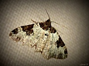 12th Sep 2011 - Moth