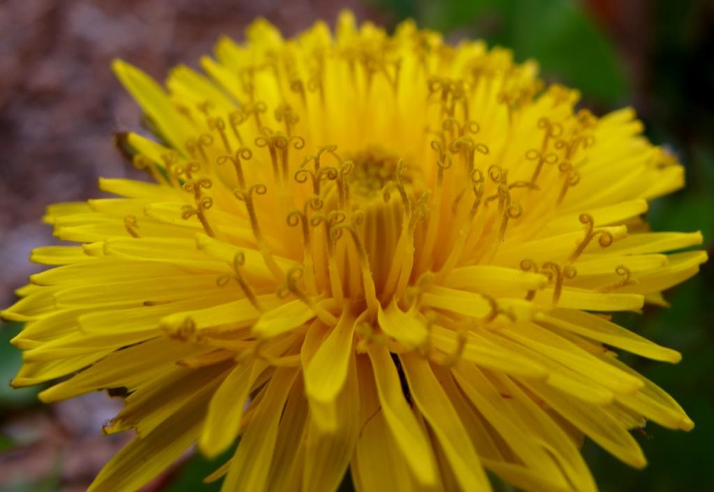 Yellow by alia_801