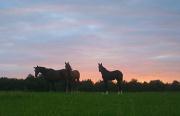 23rd Aug 2011 - Horses