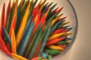 14th Sep 2011 - Toothpick Macro…check!