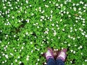 27th Apr 2010 - Standing in an Ocean of Flowers