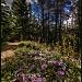 Path of Flowers by exposure4u