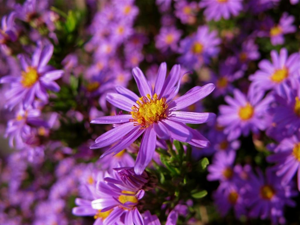 Purple by alia_801