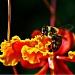 Bee-autiful by kerristephens