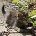 Kitten Play by herussell