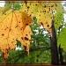 Autumn by olivetreeann