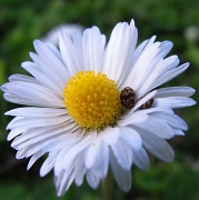 27th Sep 2011 - White (and yellow, and ladybirds!)