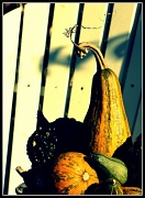 28th Sep 2011 - Gourdness me...