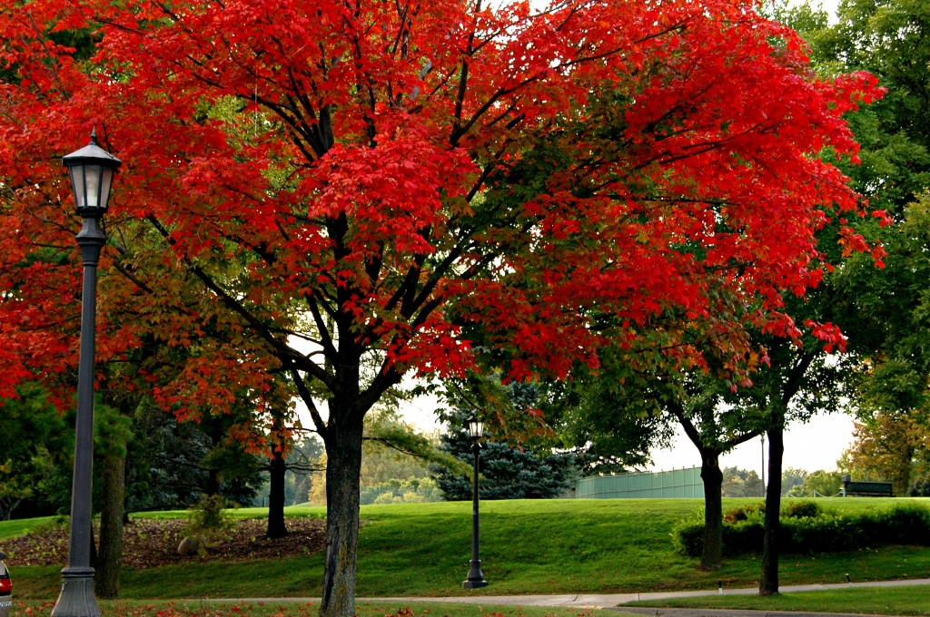more fall color by pfmandeville