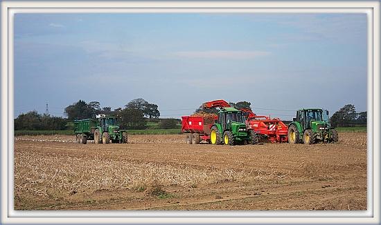 Potato Harvest. by happypat