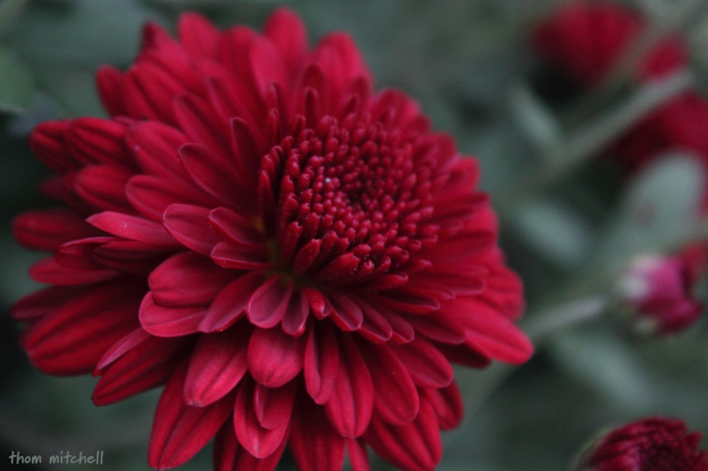 Fall flowers by rhoing