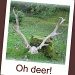 Oh deer! by jmj