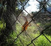 10th Oct 2011 - Spider Web