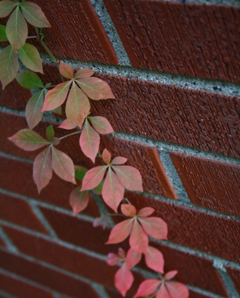 Fall on the wall by mittens