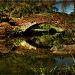 A Walk Through Central Park by exposure4u