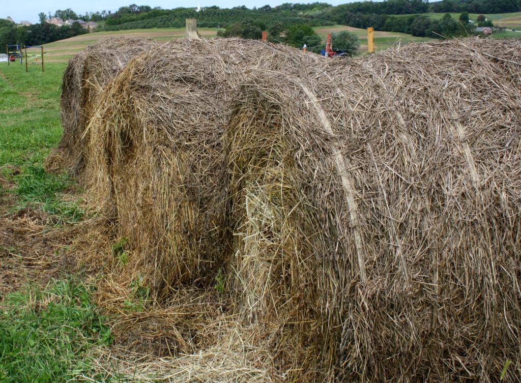 Hay by mittens