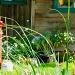 Do Not Disturb Weeds by pamelaf