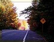 """14th Oct 2011 - """"yellow"""""""