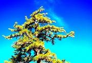 15th Oct 2011 - Tree