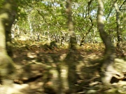 5th Oct 2011 - Knarled old trees.