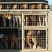 Hound dogs by parisouailleurs