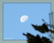 """17th Oct 2011 - """"pretty"""""""