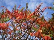 11th Oct 2011 - A splash of Autumn colours.