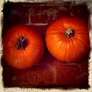 18th Oct 2011 - How long will these pumpkins last?