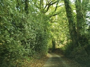 22nd Oct 2011 - Country lane.