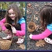 Acorn Collecting by olivetreeann