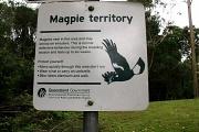 21st Oct 2011 - Magpie Territory
