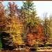 Autumn Splendor by olivetreeann